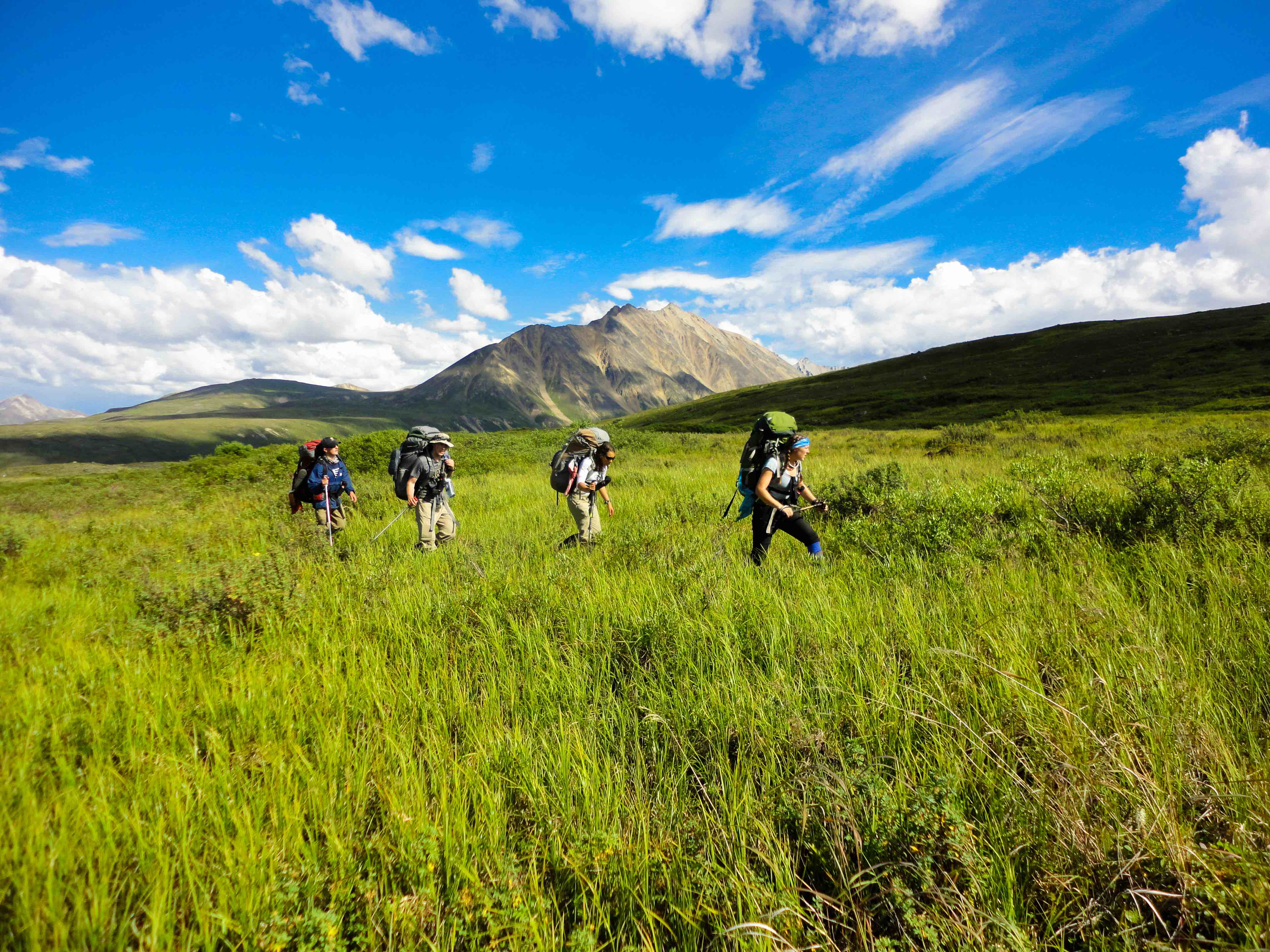 Group of four backpackers crossing a meadow in Alaska